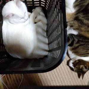 洗濯カゴ争奪戦