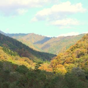 太平湖の紅葉