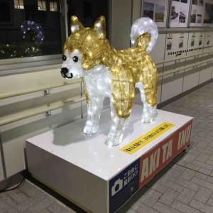 キラキラ秋田犬