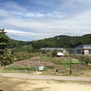 下松スポーツ公園のコスモス