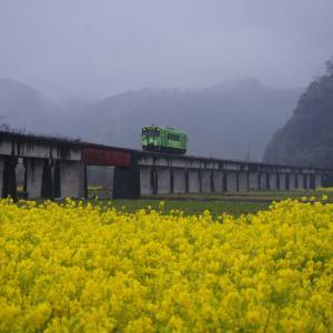 南河内駅の花情報(写真無し)