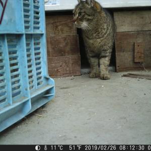 2019年02月26,7日 トレイルカメラ 猫