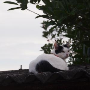 2019年08月21日 空と猫 夕