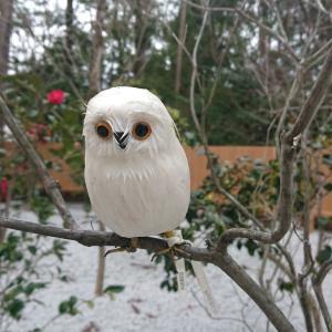 上賀茂神社の可愛いフクロウ?