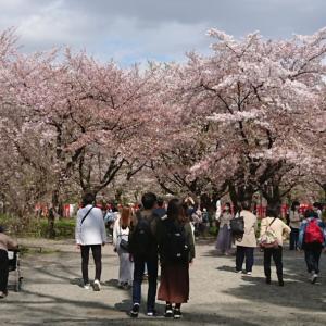 きのうの平野神社