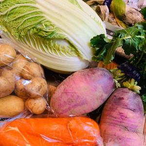 採りたて野菜で野菜たっぷりしゃぶしゃぶ
