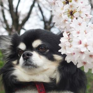 春は楽しいはずなのに・・・