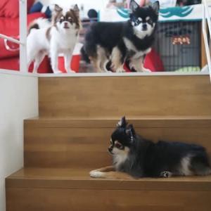 階段で撮影会?