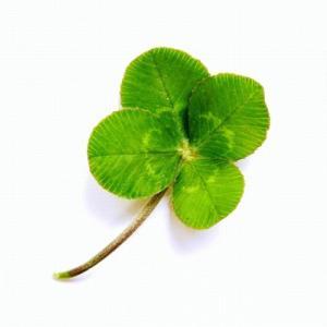 四つ葉のクローバーが幸運の象徴なら…