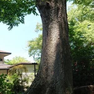 樹と繋がる方法