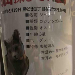 保護猫カフェ GOMA(ゴマ)