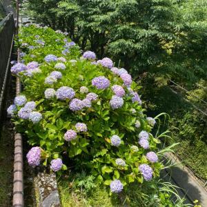 ひとり散歩、鎌倉を時短に楽しめる場所