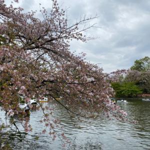 井の頭公園の葉桜
