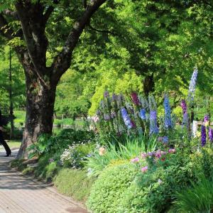 石橋文化センター薔薇園