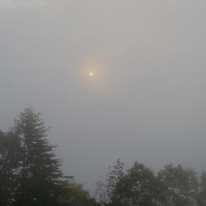 霧の中の・・・