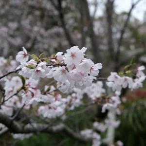 桜 庭の花たち(^^♪