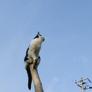 猫 木の登る(^^♪