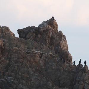 弥八島で鷹を見る!