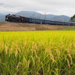 上州・帰り道(上越線C61)