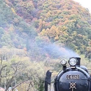 紅葉を背に休憩中(上越線C61)