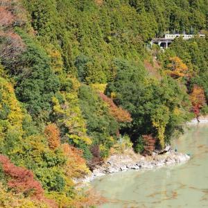 杉林の影と鉄橋(青梅線)