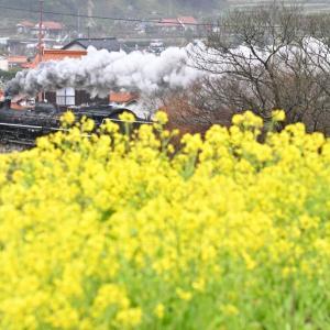 春の津和野(山口線C57)