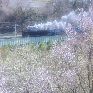 春の訪れ(上越線D51)