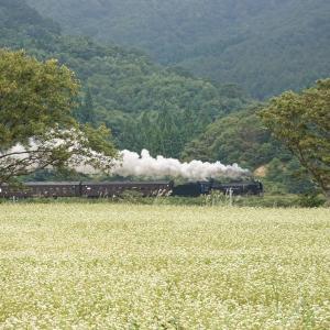 蕎麦畑を行く(陸羽東線D51)