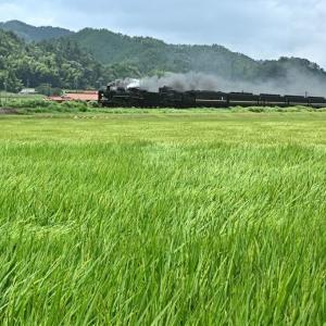 風に揺れる稲(山口線C57+C56)
