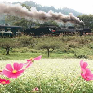 コスモスと蕎麦の花(秩父鉄道C58)