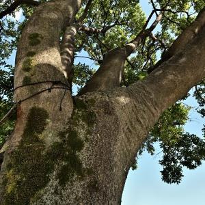 樹木の画?(高島線EH200)