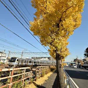 箱根駅伝で有名な国道一号沿い(横須賀線E217系)