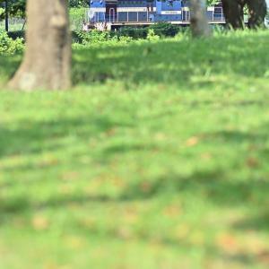 公園からチラ見(神奈川臨海鉄道本牧線DD55)