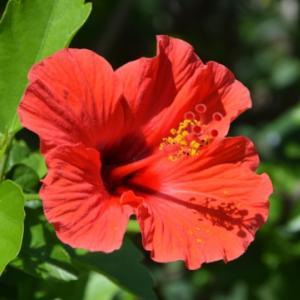 ★植物の生命力と不思議さに魅了されました♪