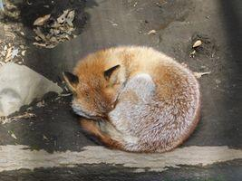 Chrome VS Firefox(多分3回目)(日記)