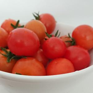 プチトマト プチ祭り