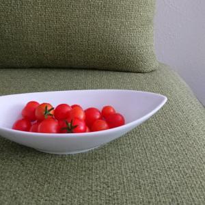 大福プチトマトが好き
