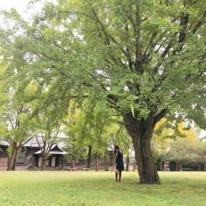 茨城県立歴史館へ✨✨-縄文の美と技、成熟する社会-