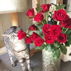 しらす君&猫ちゃんと薔薇✨