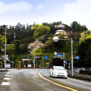 花盛りのトンネル