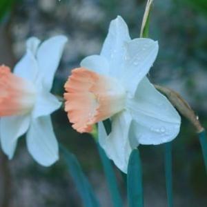 庭の花など