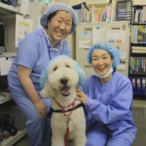 """手術に寄り添う""""病院勤務犬""""の意義"""