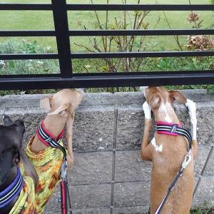 リサリサのお庭にいるのは 誰だち???