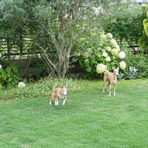 雨ふるまえに お庭でグルグル