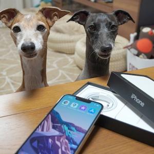 『 iPhone13 Pro 』マクロってなんだち?