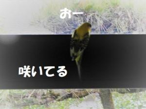 みかんちゃんの発見!