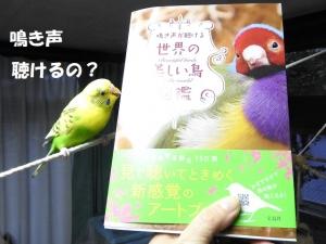 癒やされる美しい鳥たち