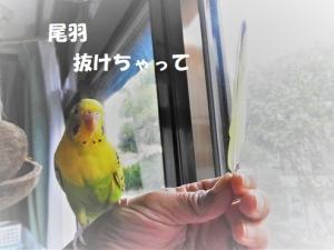 みかんちゃんのイメージチェンジ