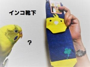 黄色いインコ靴下