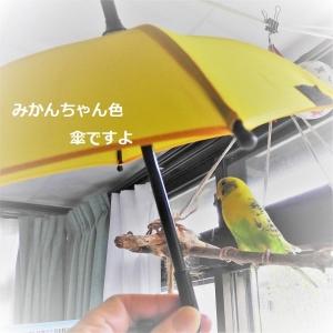 ミニミニ黄色い傘の使い方